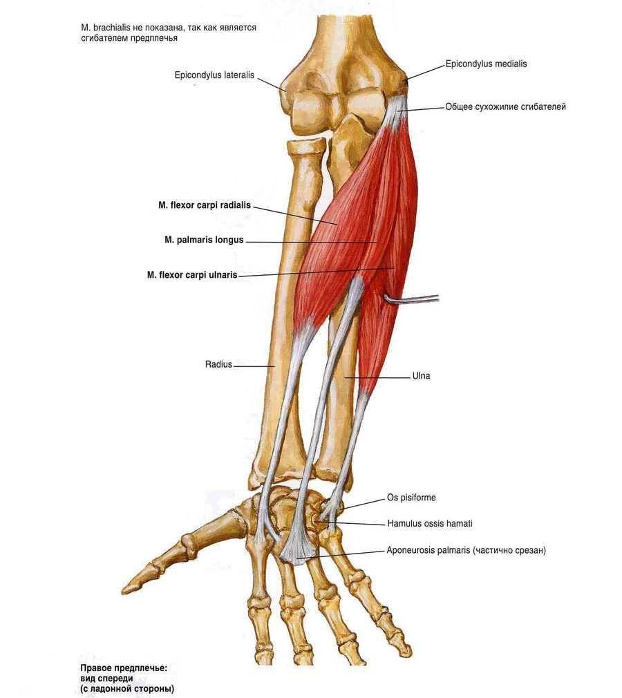 mi fáj a bokaízület artrózisával