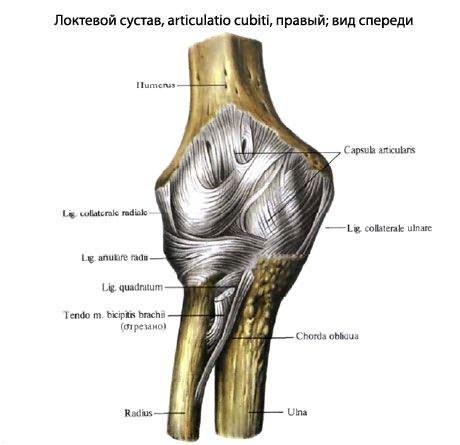 koszveny jelei enyhítse a lábízület fájdalmát