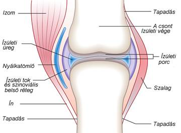 térdízületi tünetek artrózisa és kezelése