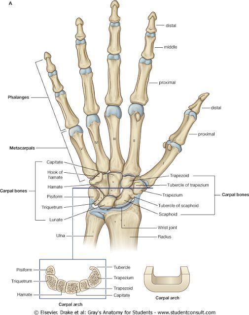 Radiocarpalis arthrosis