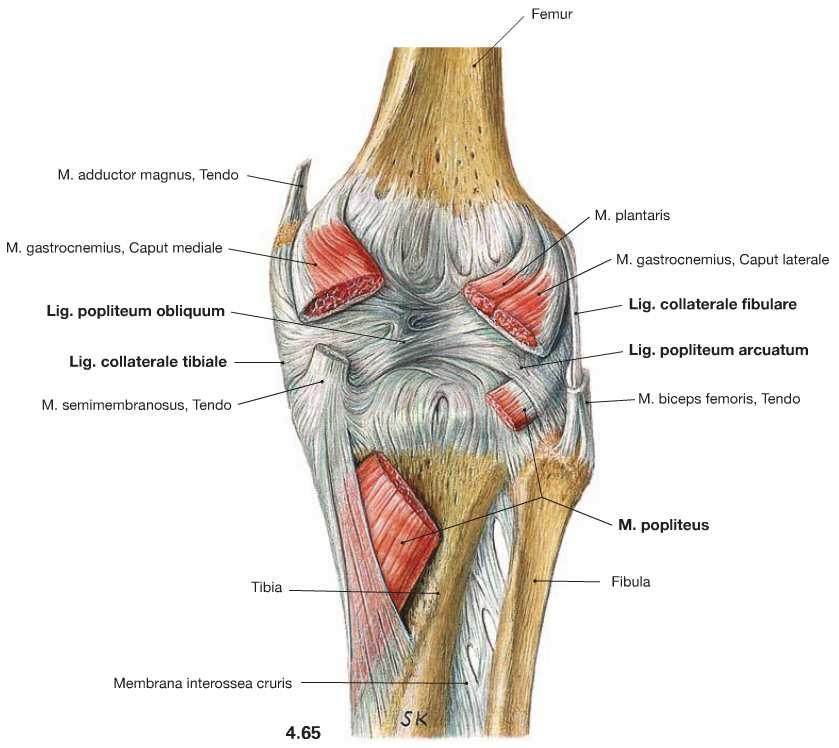 Patellofemoralis fájdalom-szindróma