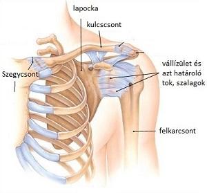xefocam térd artrózisával