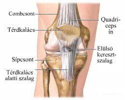 melegíthető-e a csípőízület artrózisa amit nem lehet megtenni a térdízület artrózisával