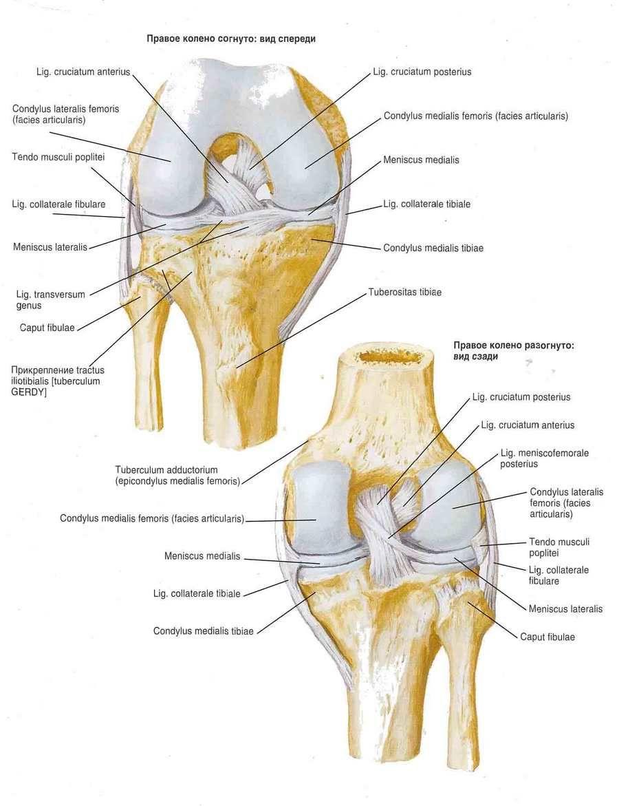 térdízület gyulladás szinoviális membránja a vállízület traumatikus artrózisa