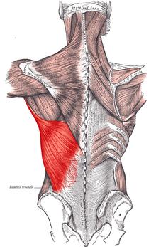 fájdalom a csípőízületek nyomásakor