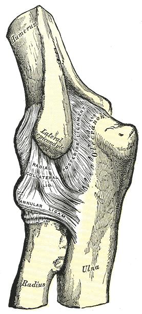 a könyökízület ízületi gyulladása