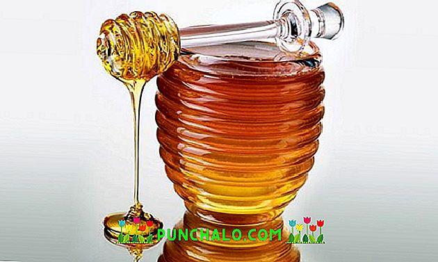 Méhterápia a XXI. század gyógyászatában - Egészség és tudomány