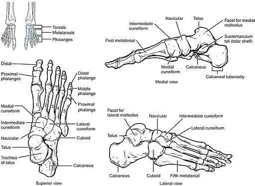 fájdalom a láb ízületei