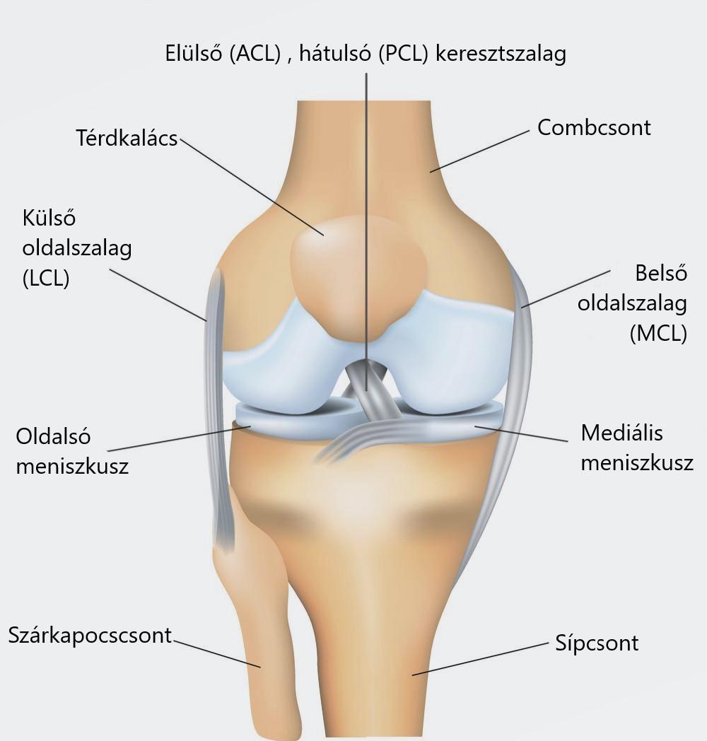 artrózis 2 térdízület kezelése 3 fok vállízületi betegségek kezelési módszerei