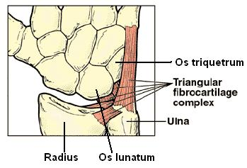 A scaphoid csont, a lábak tünetei és kezelése - Talpbetét