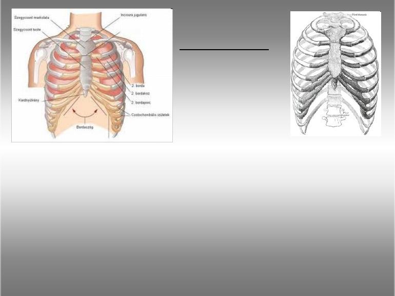 A mellcsont-kulcscsonti ízület betegségei