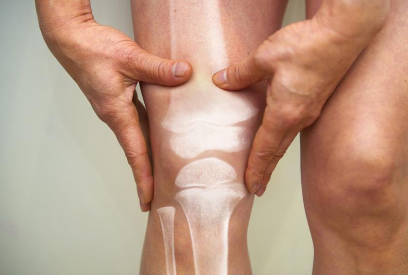 ízületi lóhere kezelés a csípőízületek kezelésének maradék diszplázia