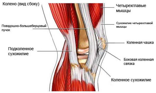 a térdízület oldalsó ligamentuma kenőcsök ízületekhez és szalagokhoz sportolók számára