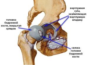 a gyaloglás hasznos a csípőízület artrózisában szorító fájdalom a térdben