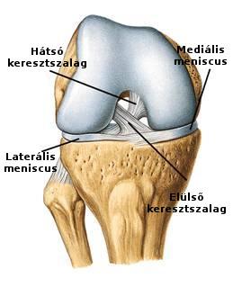 a térd keresztező ligamentuma károsodásának tünetei