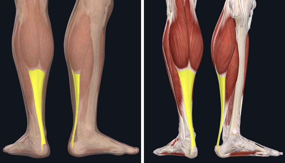 valerian tinktúra ízületi fájdalmak kezelésére csuklóízületi fájdalom