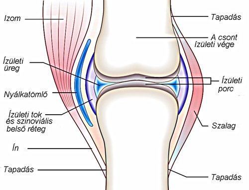 a térd ízületi tünetei