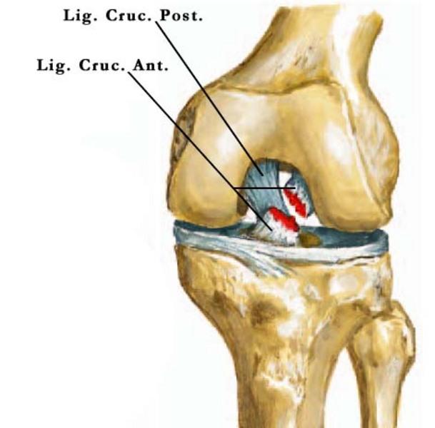 ízületi fájdalom az ureaplasma miatt