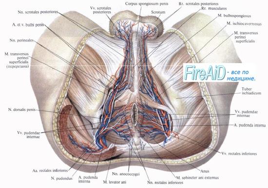 térd osteoarthrosis kezelése szinovitissal melegíthető-e a csípőízület artrózisa