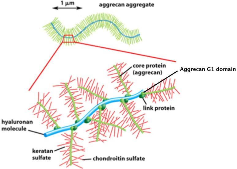glükózamin-kondroitin bőrértékelések arthrosis kezelés következményei