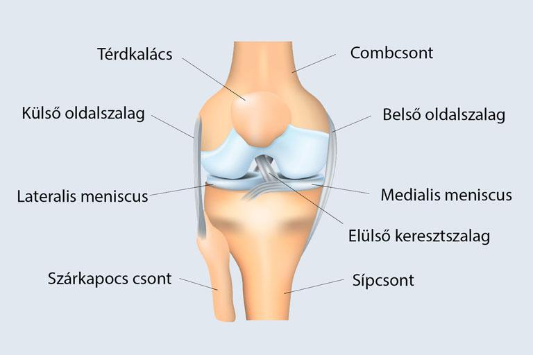 az első metatarsális ízület deformáló artrózisa a könyökízület sérülései és betegségei