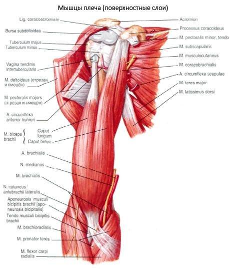 hogyan lehet megállítani a csípőízület gyulladását a térd artrózisának jelei és kezelése