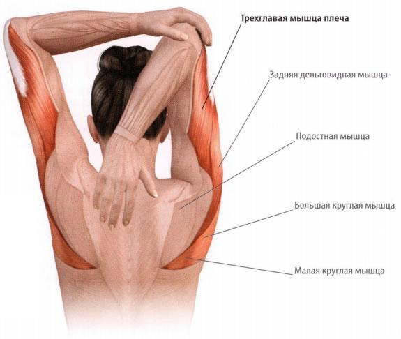 a térdízület feszültsége fájdalom a csípőízületek nyomásakor
