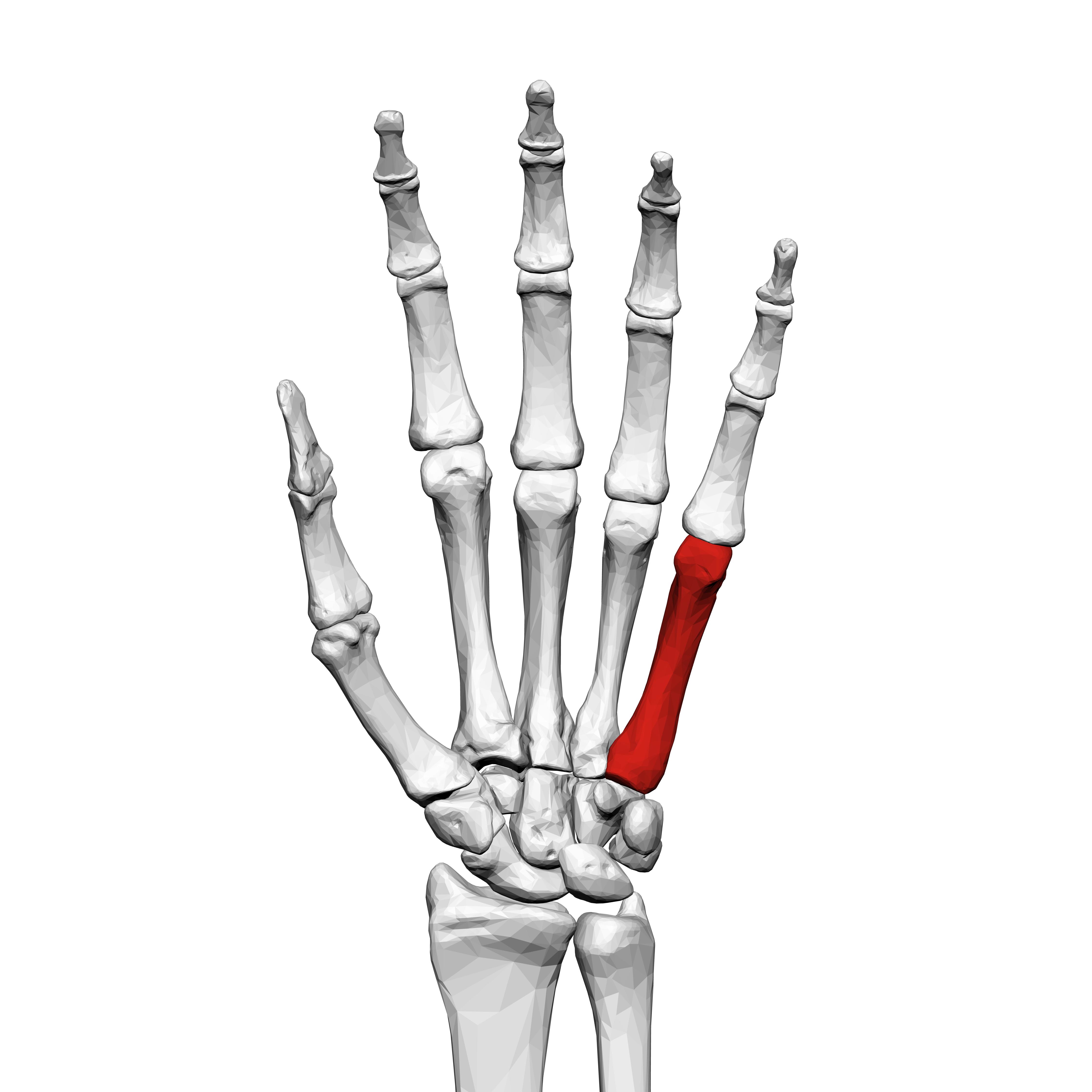 metacarpitis a bal térdízület artrózisa 2 fok