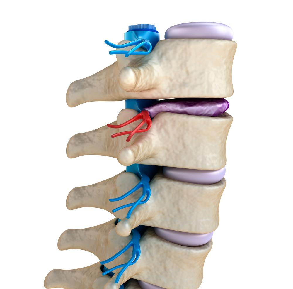 rögzített ízületek kezelése az artrózis és a csípőízület coxarthrosisának különbsége