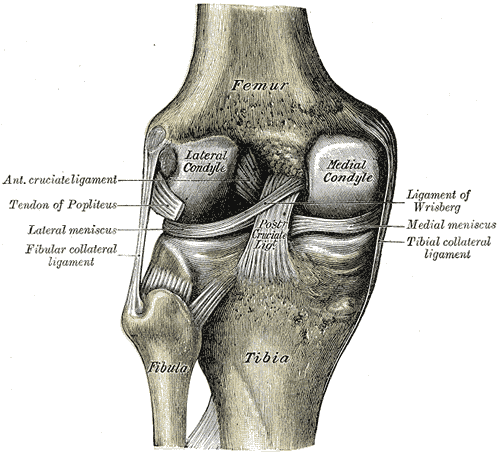 az artrózis legjobb kondroprotektorjai ízületi fájdalom a yarinából
