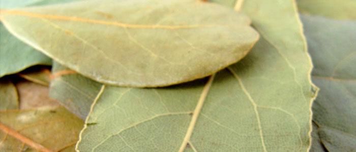 5 ízületi gyulladáscsökkentő fűszernövény a boszorkánykonyhából