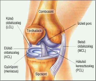 Ízület felépítése, ízületi fájdalom kezelése Safe Laserrel