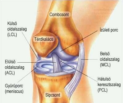 Hatékony a térd artrózisának kezelésében. EXTRA AJÁNLÓ