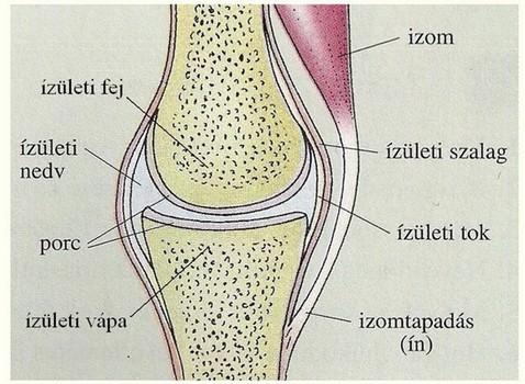 szakaszos fájdalom a csontokban és ízületekben