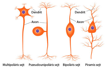 neurológiai rendellenességek kötőszöveti betegségekben)