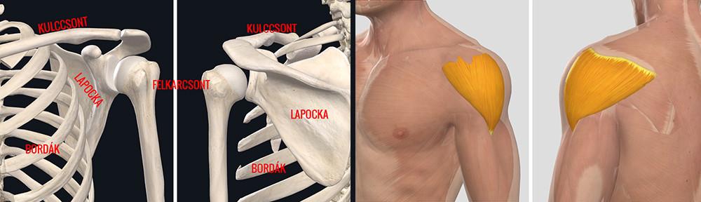 nicoflex a vállízület fájdalma ínszalag ízületek kezelése