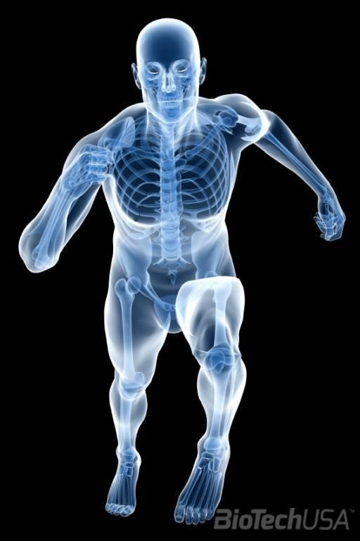 Termékek ízületi támogatáshoz - BioTechUSA