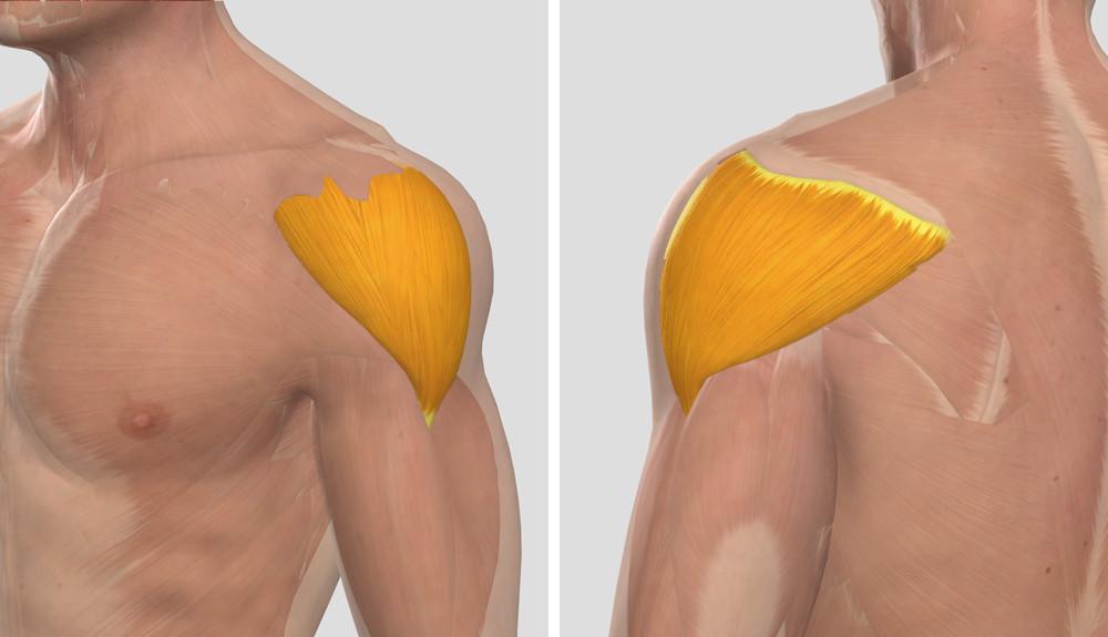 diklofenak a vállízület fájdalma miatt a térd artrózisának homeopátia kezelése