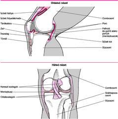 szakaszos fájdalom a csontokban és ízületekben krém hatás az ízületekre