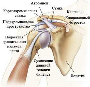 A vállízület artrózisa 2 fok - Arthritis July