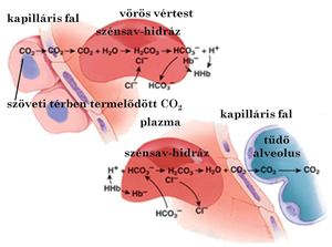 együttes kezelés szén-dioxiddal