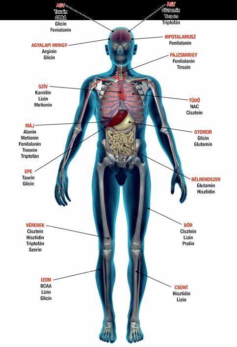 a boka ízületi gyulladása, mint a fájdalom enyhítése ízületi kezelés hemlock tinktúrával