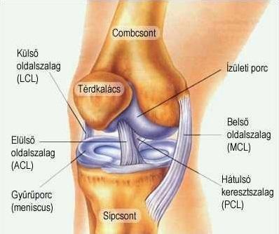 a térd artrózisának kezdeti jelei