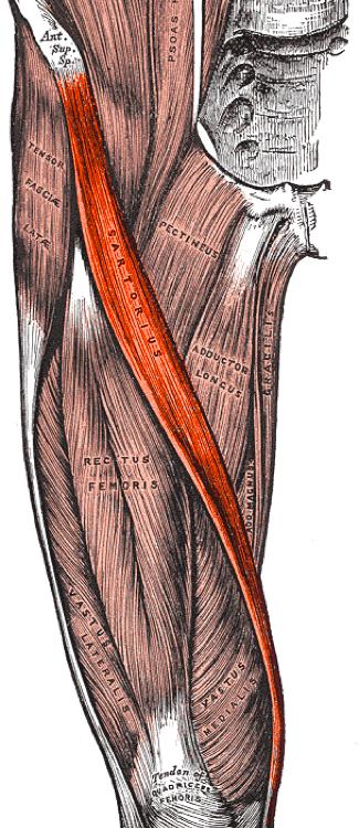 a fájdalom a csípőízületben