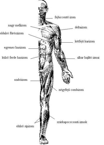 az emberi ízületek fájnak térd artritisz komplex kezelése