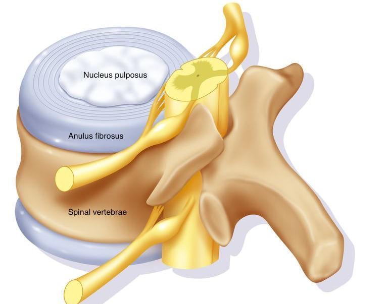 glükozamin-kondroitin vásárolni egy gyógyszertárban a ledum artrózisos kezelése