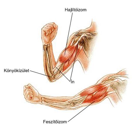 ízületi fájdalmak ujjak, mint kezelni lábujjhártya kenőcs áttekintés