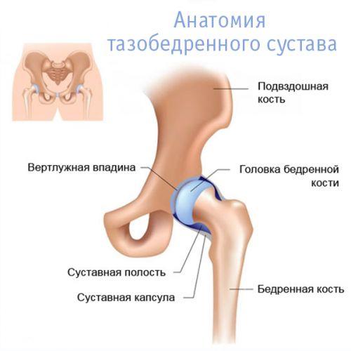 miért fáj az endoprotetizáló csípőízület