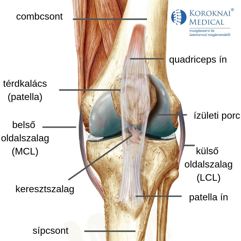 csontritkulás és térdízület fájdalma