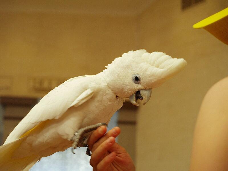 ízületi gyulladás papagájban fájdalom a jobb könyökízületben mozgás közben